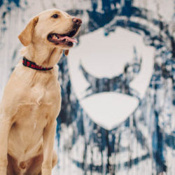 A Mad Scientist sört, a BrewDog szabit ad a kutyához