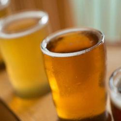 Egy dél-amerikai élesztőgombának köszönhető a lager sör?